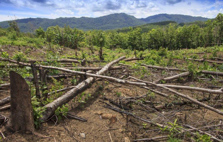 Deforestazione e relazioni con la tecnologia 5G