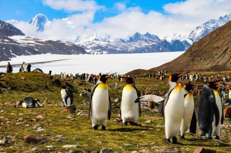 Antartide senza neve, le isole superano i 20 gradi con caldo record - Il  Riformista