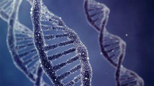 Curiosità: un gioco online per migliorare l'editing del DNA