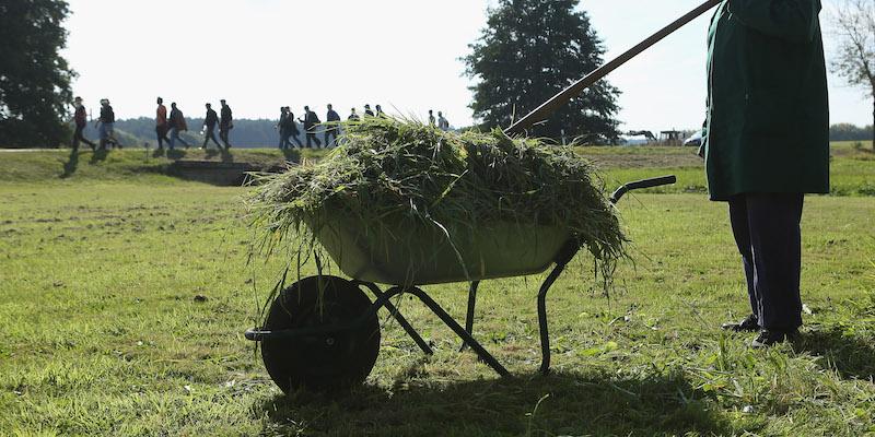 Il profumo di erba tagliata è un grido di dolore
