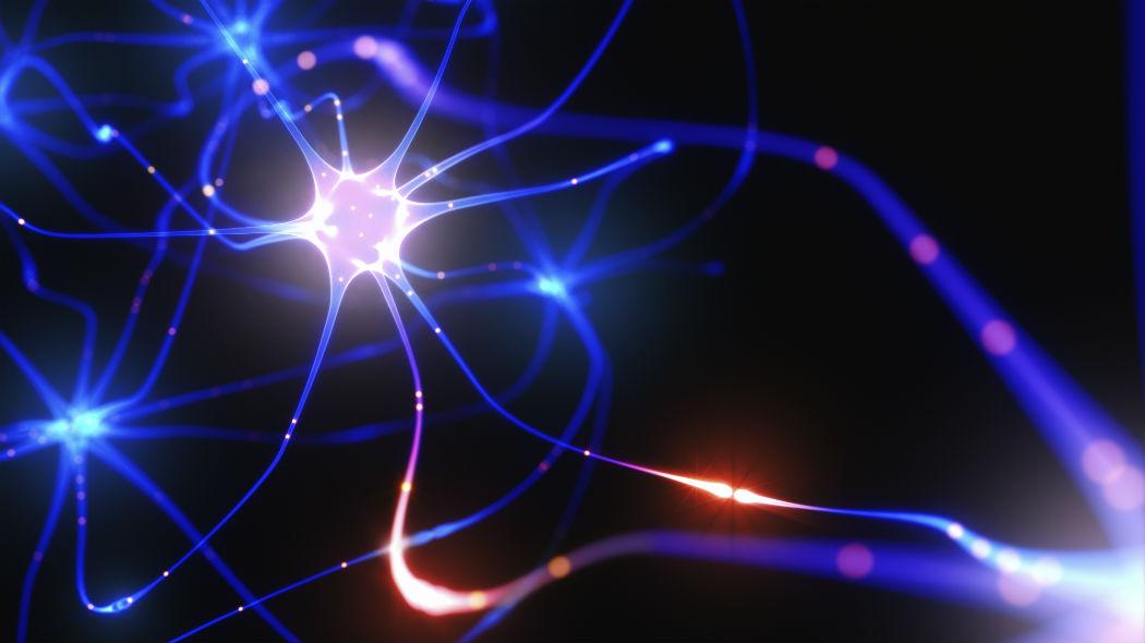 """La paura può essere """"spenta"""": il ruolo dell'ossitocina nei circuiti neurali"""