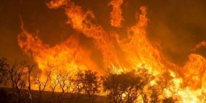 Il polmone del mondo in fiamme: la terra sta morendo, come (non) risolvere il problema?