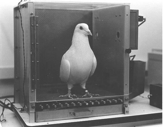 """""""La superstizione del piccione"""" e il libero arbitrio secondo Nemo Nobody e Spinoza"""
