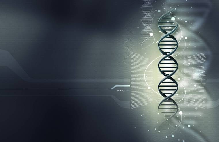 Cellule staminali di ultracentenari al microscopio: si cercano i segreti della longevità