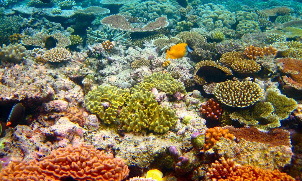 Il 22 maggio è stata la giornata della biodiversità: perché è importante conoscerla e tutelarla