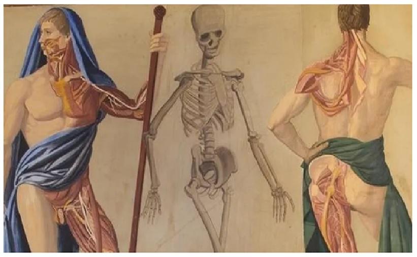 Analisi dell'abilità innata di Kimimaro: struttura e funzioni della resistenza del tessuto osseo