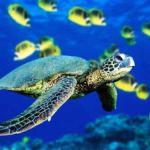 Salvemos a las tortugas marinas con LEDs