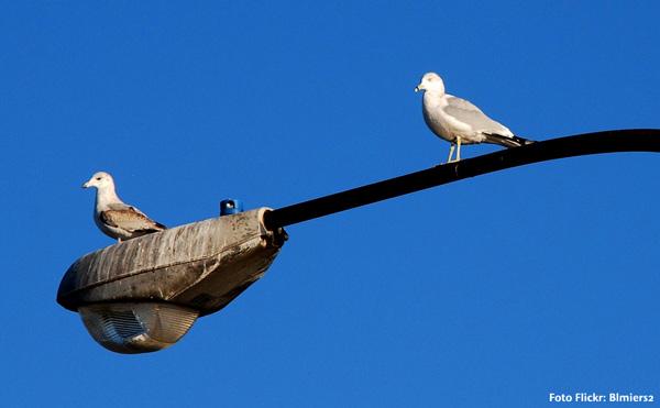 aves y luminarios