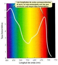 Espectro_fotosintesis