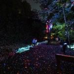 """""""Vallea Lumina"""" lleva luz a los bosques del norte"""
