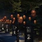 Foresta Lumina, un bosque encantado