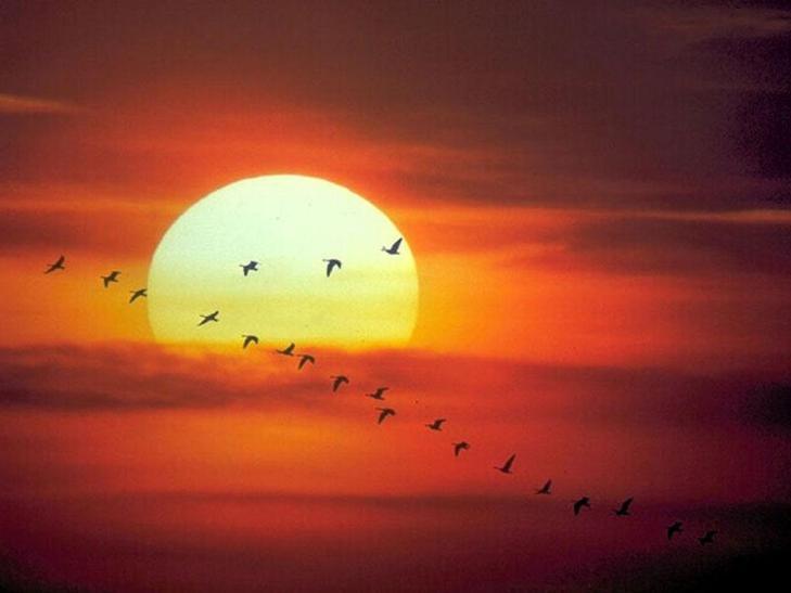 ventajas-y-desventajas-de-la-energia-solar
