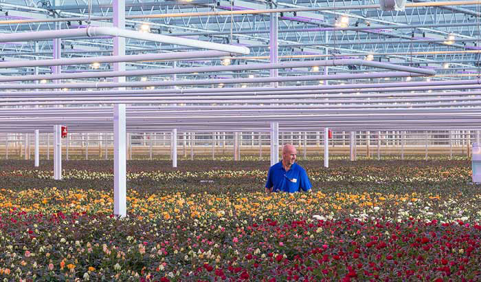floriculture-philips