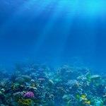 Cuando la luz del Sol nada en los océanos