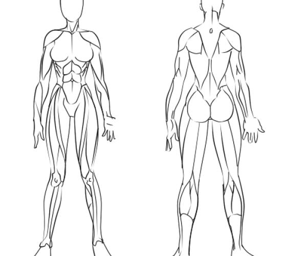 musculo femenino