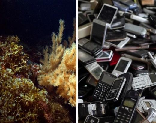 estrazioni, movimento protezione oceani greenpeace