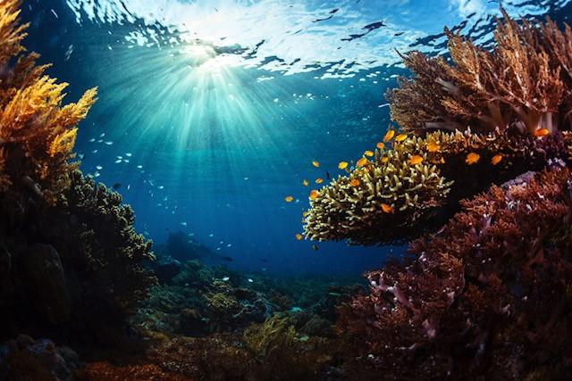 cambiamento climatico risorse ittiche
