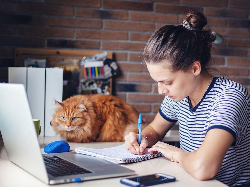 animali in ufficio