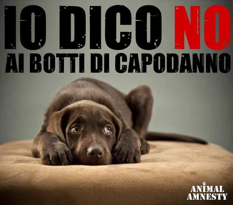 IO DICO NO AI BOTTI DI CAPODANNO!!