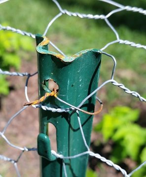 Picture taken July 31st showing the wire I used as a twist tie. You can also see how the fencing fits into the nub sticking out also providing some stability for the fencing. The wires did rust a bit and there is a little rust on the top of the post, probably from where I hit it with the hammer when pounding them into the ground.