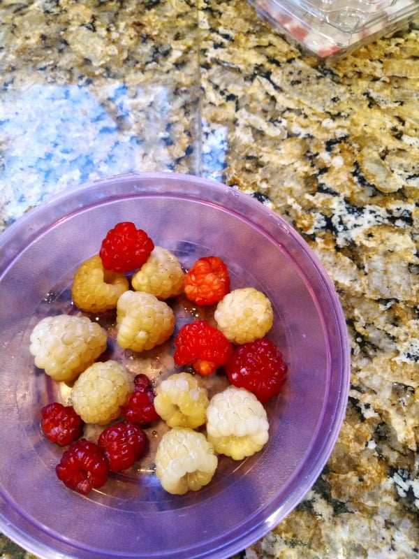 9/13/19 - first year cane raspberries, Anne and Joan J.