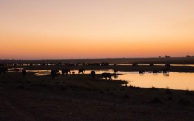 Tientallen olifanten in het licht van de ondergaande zon bij de Chobe rivier ter hoogte van Ihaha Camp