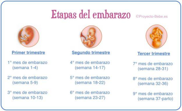 embarazotapas_del_embarazo_1