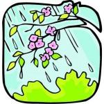 Imgenes primavera (5)