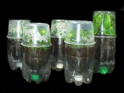 Huerto escolar botellas plastico y otros materiales reciclados (4)