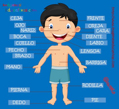Partes del cuerpo en Castellano (3)