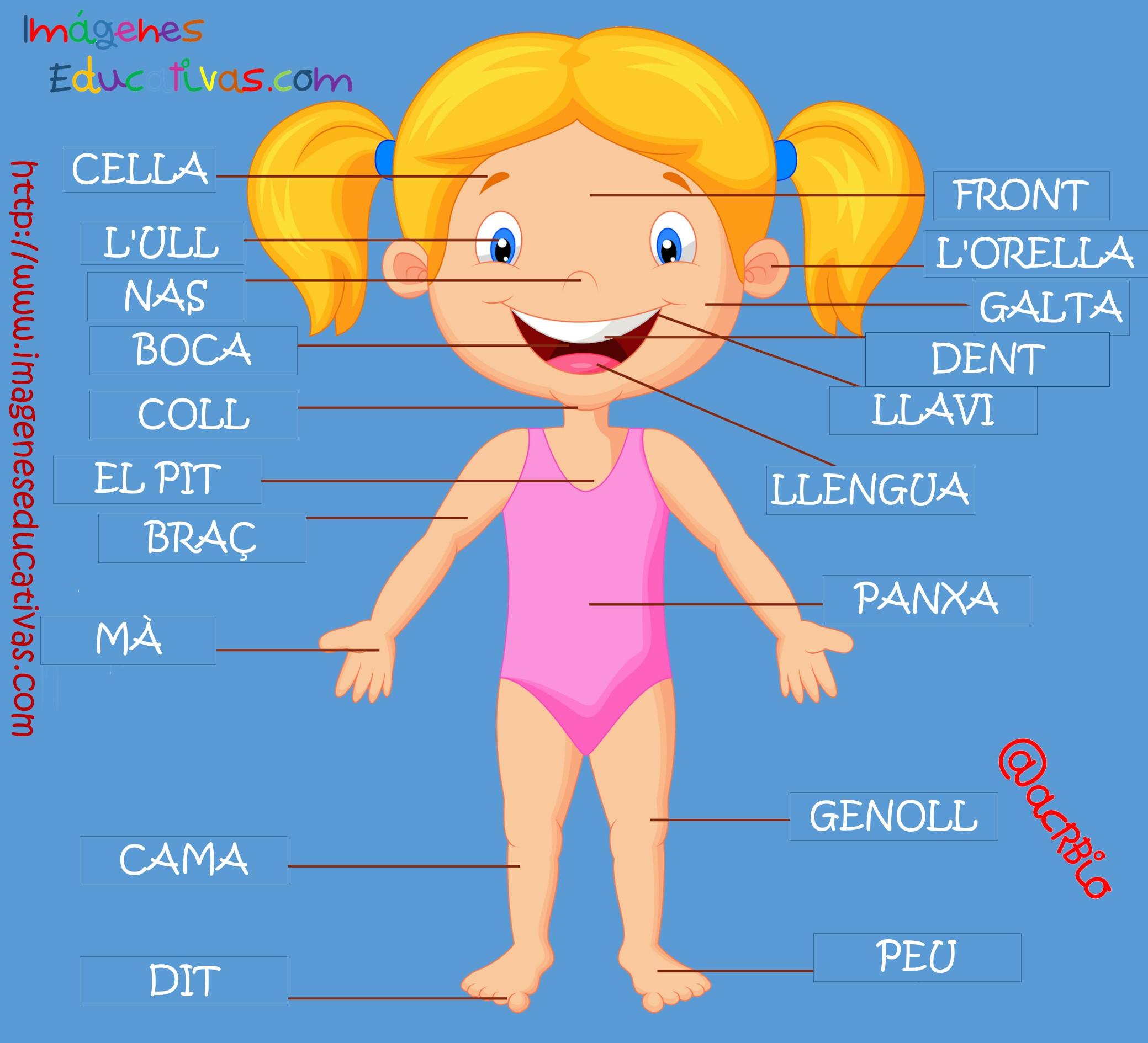 Partes del cuerpo en Catalán (1) - Imagenes Educativas