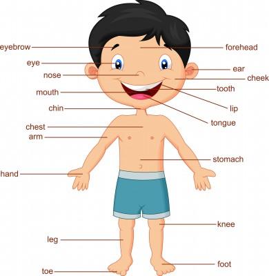 Partes del cuerpo ingles niño