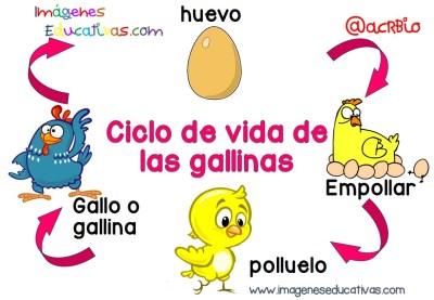 Ciclos vitales para niños  (1)