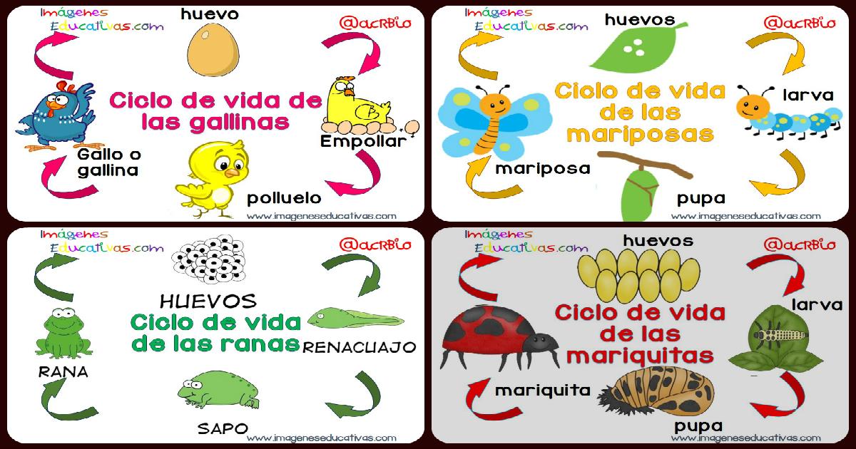 Ciclos Vitales En Imágenes Y Sencillos Para Niños Imagenes Educativas