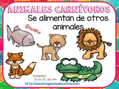 Tipos de animales claseficación (7)