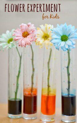 Experimentos colores (4)