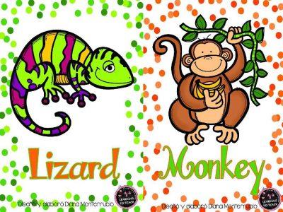 Tarjetas De Animales De Zoológico Y Hábitats (15)