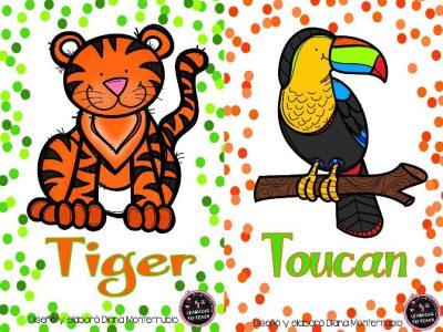 Tarjetas De Animales De Zoológico Y Hábitats (19)