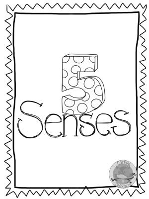 los-5-sentidos-12