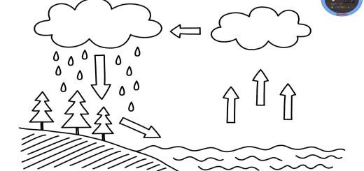 ciclo del agua Archivos - Imagenes Educativas