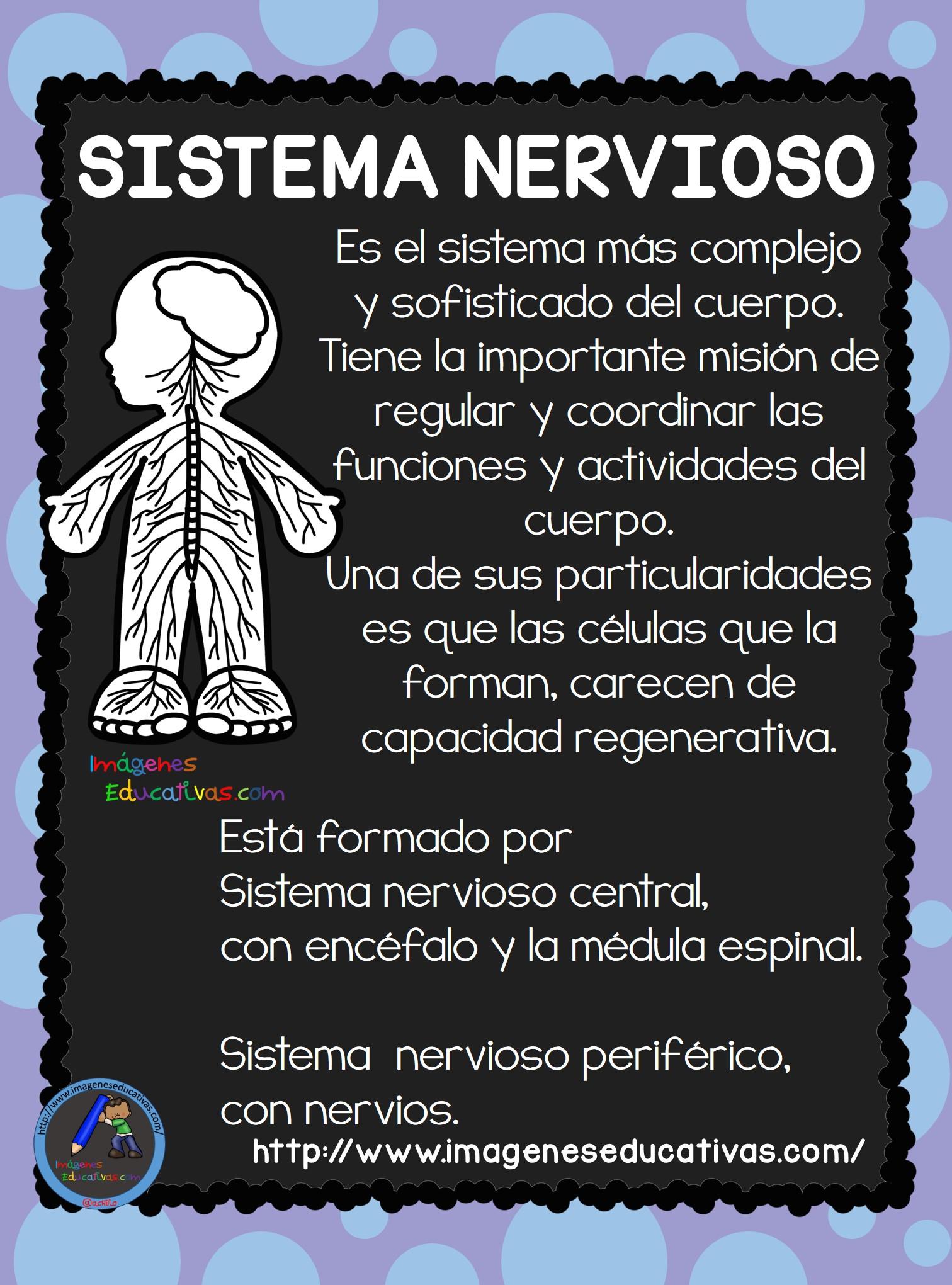 El Cuerpo Humano; Aparatos y Sistemas para Primaria (15