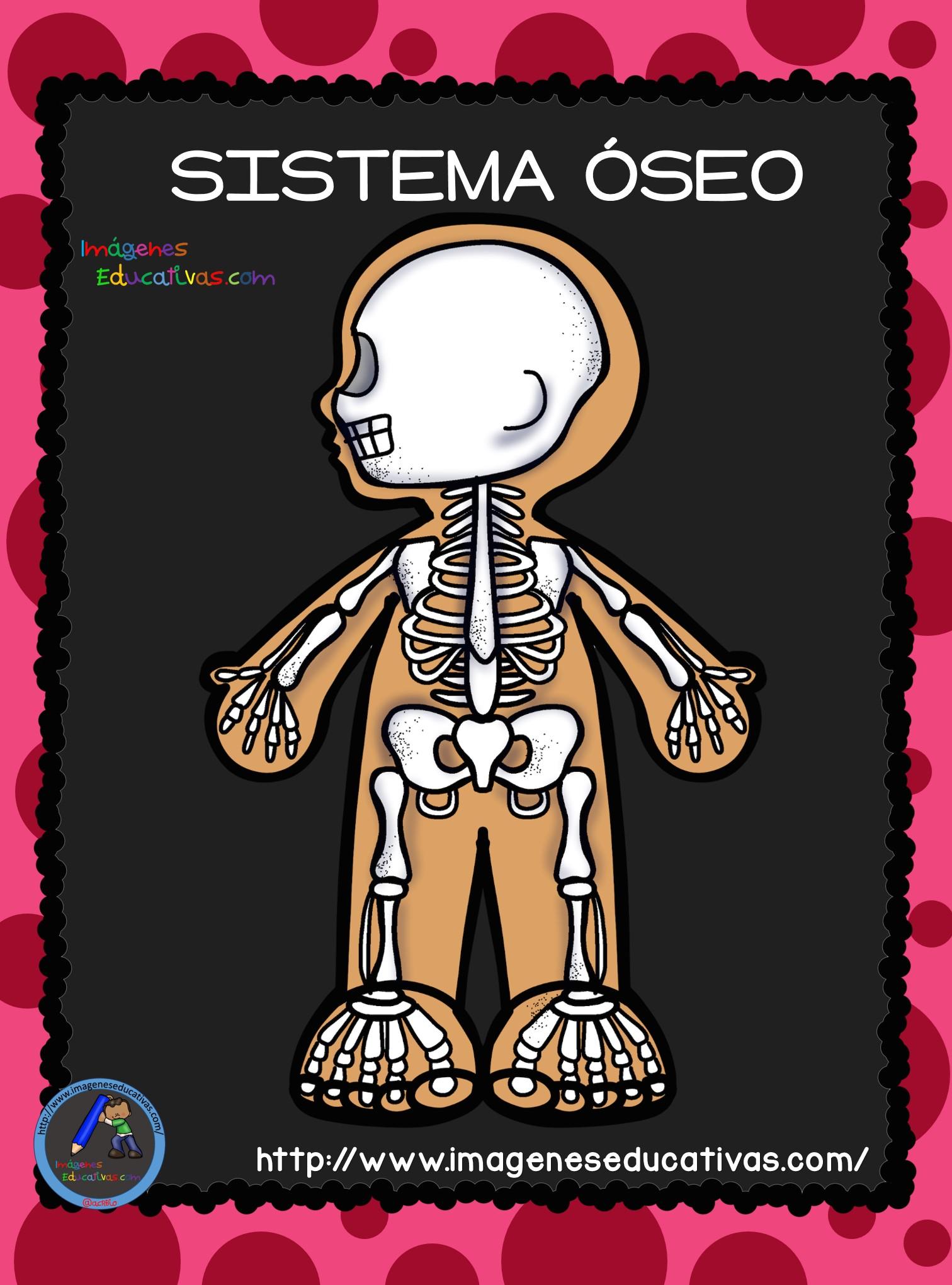El Cuerpo Humano; Aparatos y Sistemas para Primaria (2