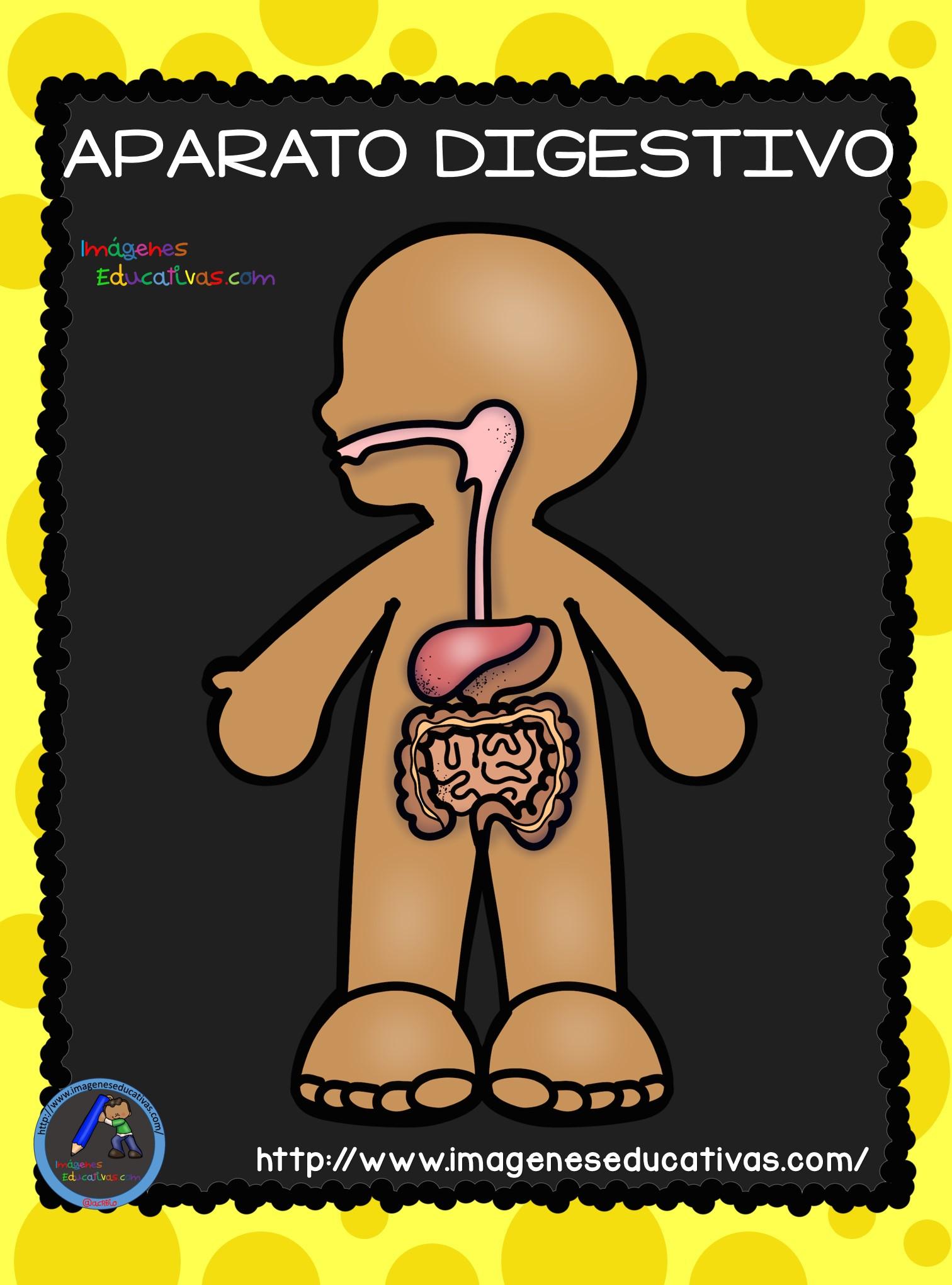 El Cuerpo Humano; Aparatos y Sistemas para Primaria (4) – Imagenes  Educativas
