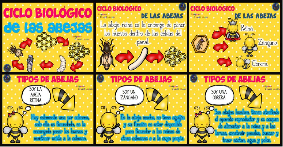 Ciclo Biológico De Las Abejas Para Niños Imagenes Educativas