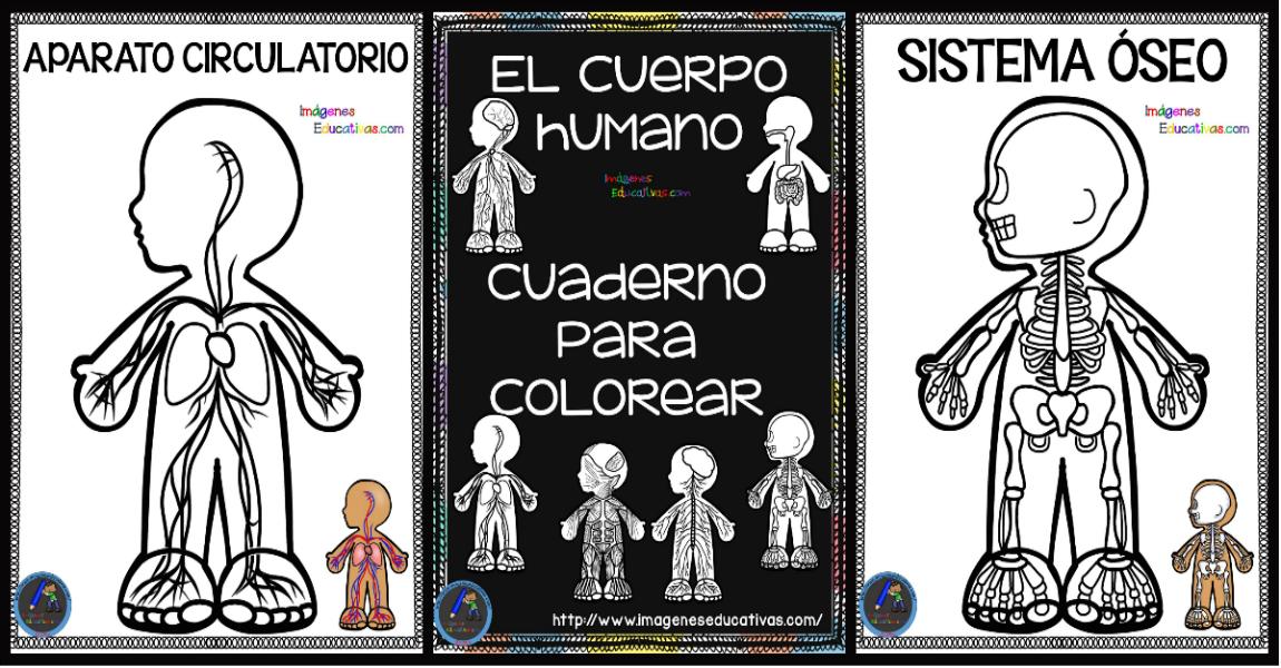 Cuaderno Del Cuerpo Humano Para Colorear Imagenes Educativas