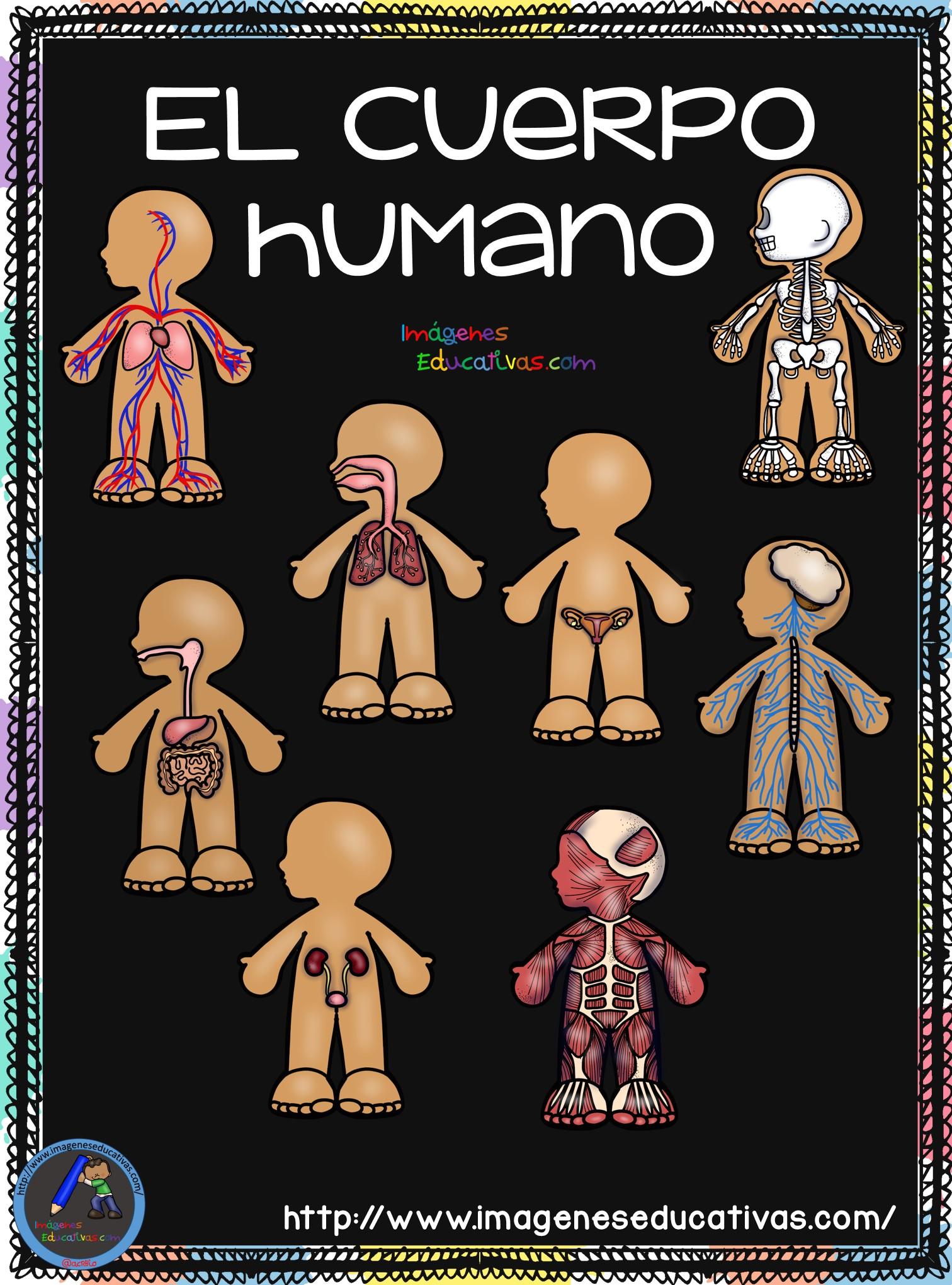 El Cuerpo Humano 2018 (1) Imagenes Educativas