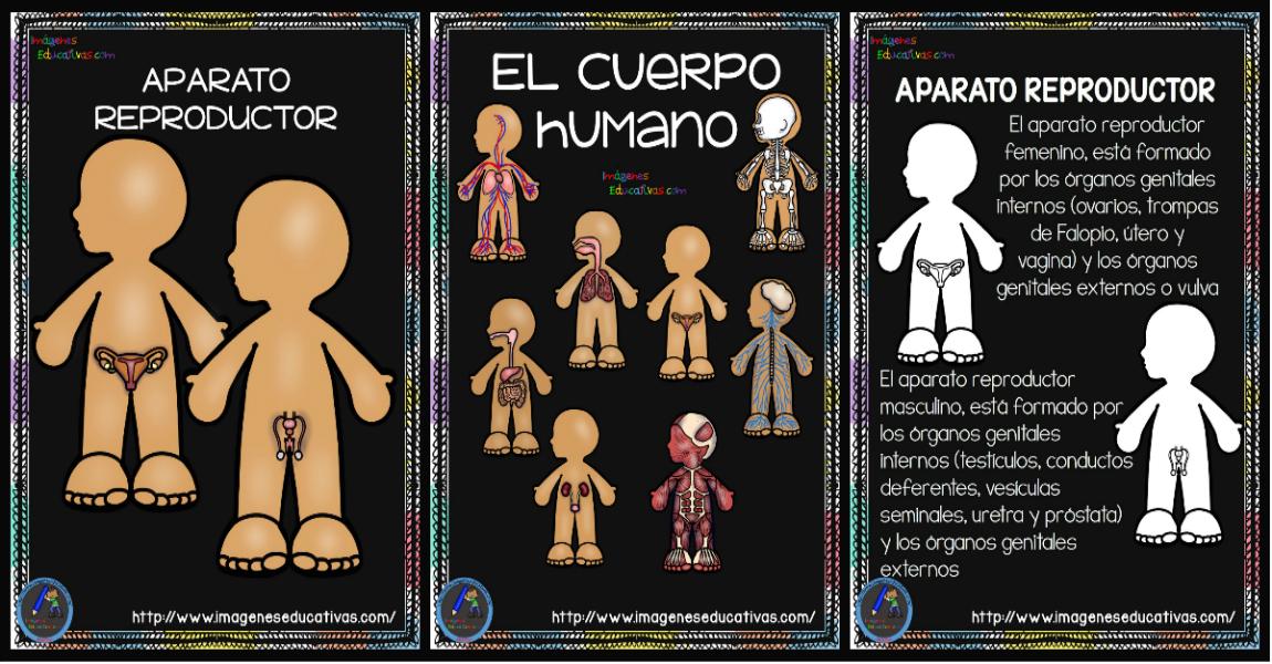 Cuaderno del Cuerpo Humano; Aparatos y Sistemas para