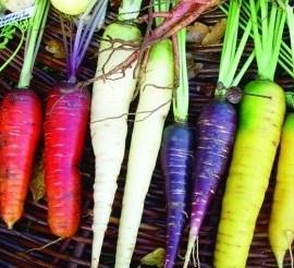 carottes_colorées