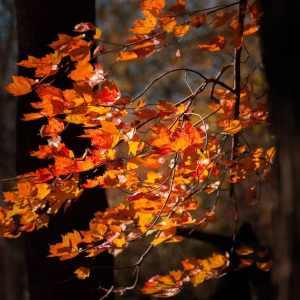 warm, fall, colors, sun, leaves