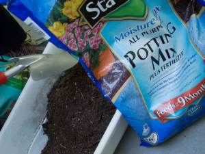 The potting mix looks like real dirt
